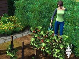 Sims 3 Garden Ideas Gardening The Sims 3 The Sims Wiki Fandom Powered By Wikia