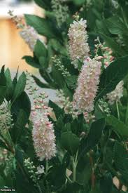 Flowering Shrubs That Like Full Sun - shrubs for areas with high shade deciduous trees shrub and plants