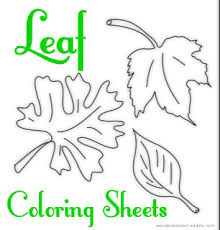maple leaf coloring page collection wonderweirded wildlife com