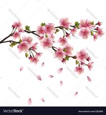 Japanese Cherry Blossom Tree by Sakura Blossom Japanese Cherry Tree Isolated Vector Image