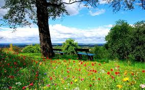a beautiful spring day hd desktop wallpaper widescreen high