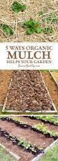 What Type Of Soil For Vegetable Garden - 5 ways organic mulch helps your vegetable garden