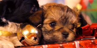 puppies opening presents for you on your big