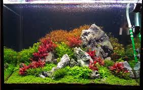 Aquascape Aquarium Plants Ensuring Tissue Culture Success The Planted Tank Forum