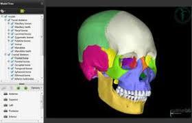 Human Anatomy Skull Bones Ou Hcom 3d Interactive Human Anatomy
