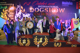 affenpinscher crufts 2016 fci md home