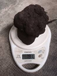 forestals black friday 2016 youtube trufflefarming truffle science into farming tools page 9