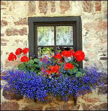 summer window box ideas shades shutters blinds