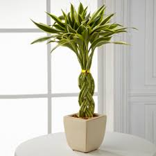 low light houseplants plants that don t require much light top 10 low light indoor plants that are easy to grow i love herbalism