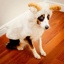 Funny Animal Halloween Costumes 25 Dog Costumes Ideas Dog Halloween