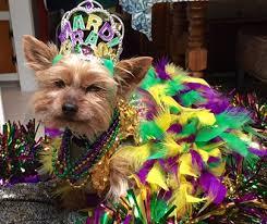 mardi gras dog mardi gras dog or pet crowns ddmgcr