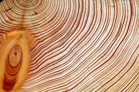 tree rings images Dendrochronology time team america pbs jpg