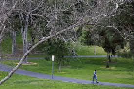 uc irvine s leafy cus is now one big laboratory to fight tree
