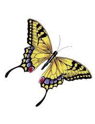 yellow monarch butterfly yellow monarch butterfly ink