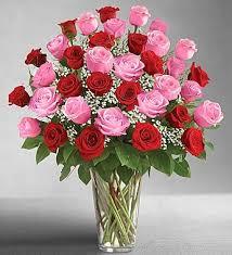 a dozen roses 3 dozen roses