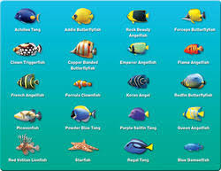 marine fish marine cashimara manufacturers suppliers