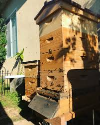 two hives are better than one keeping backyard bees