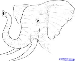 drawing pictures of elephant drawing art library