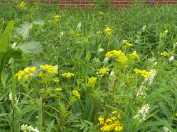 ohio native plants plan your visit the ohio state university at marion