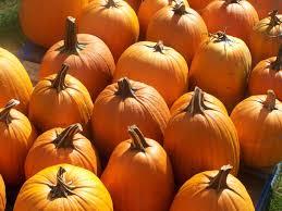 autumn pumpkin wallpaper pumpkin patch wallpaper hd