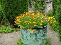 cottage garden flowers love the hardscape and the container is gorgeous i would prefer