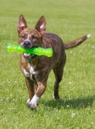 hyperactive dogs the 11 best toys for hyperactive dogs my dog s name