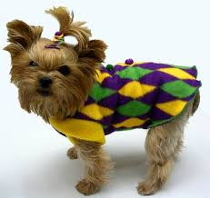 mardi gras sweater mardi gras dog clothes