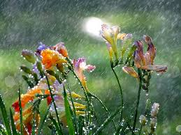 most beautiful monsoon flowers of india citigardener