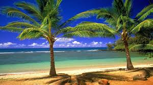 palm tree beach wallpapers wallpaper cave