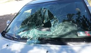 bear destroys car after getting trapped inside looking for food