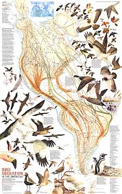the americas map bird migration in the americas map