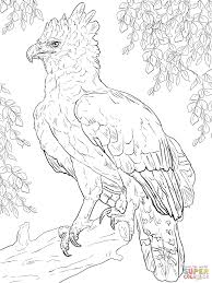 harpy eagle perched on a branch coloring page free printable