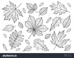 big set images leaves different trees stock vector 298618052