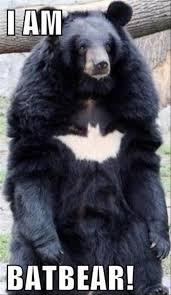 Stupid Animal Memes - batbear batbear best memes of all time dirty funny memes