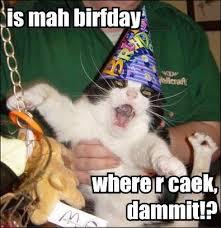 Meme Birthday Cake - birthday cake cat macros