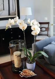 Home Interiors Figurines This Is Orchid Bedding Ideas Decor Orchid Inspiration Orchid Home