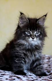 1967 best cat and flower images on pinterest animals drawings