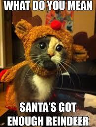 Christmas Funny Meme - meme 2014 christmas kitty