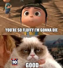 Best Grumpy Cat Memes - grumpy cat memes rainbows