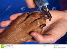 cutting dog nail stock image image 23181891