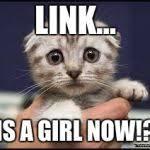 Kittens Memes - kittens meme generator imgflip