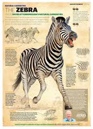 atodd when harvard met sally 7 best zoology images on pinterest animal science zoology and