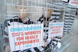 anti thanksgiving quotes victory china southern airlines ends shipments of primates to