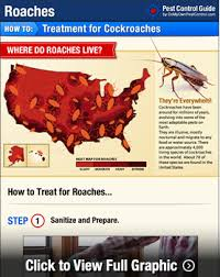 How Do I Get Rid Of Rabbits In My Backyard How To Get Rid Of Roaches Kill Roaches Diy Cockroach Treatment