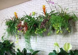 best plants for vertical garden vertical garden plants balcony
