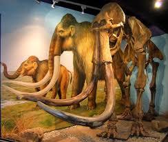 shukernature mammoths town