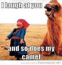 Camel Meme - 20 very funny camel memes and photos i can has cheezburger