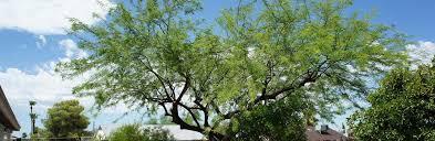 tree pros arizona s largest residential tree company tree pros