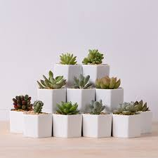 Ceramic Succulent Planter by Popular Ceramic Flower Planter Buy Cheap Ceramic Flower Planter