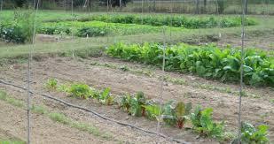 sustainable vegetable garden gardensdecor com
